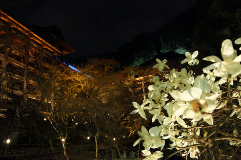 Kiyomizudera1003272