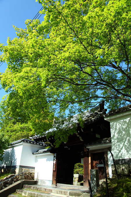 Toufukuji1006056