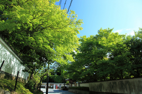Toufukuji1006057