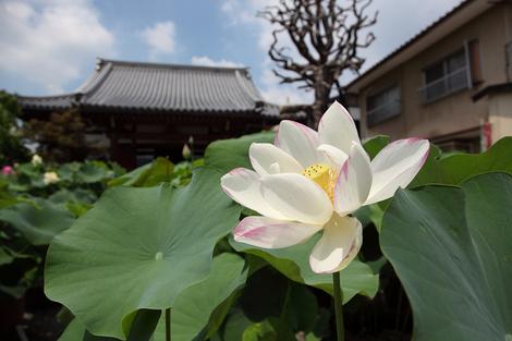 Dairenji1008061