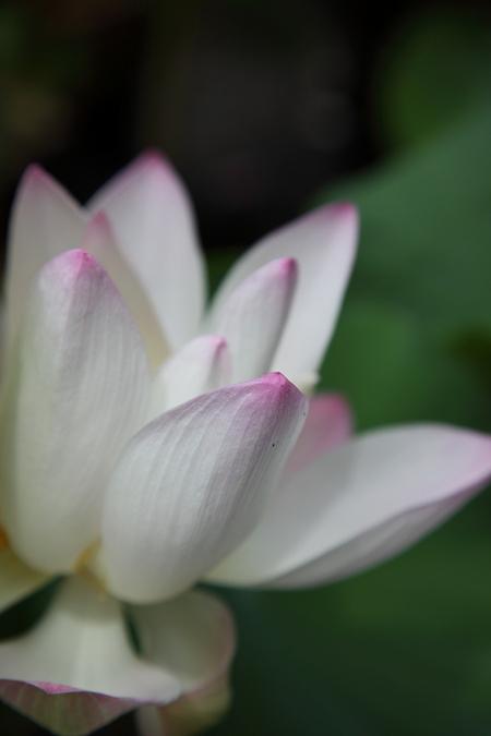 Ryuhonji1008121
