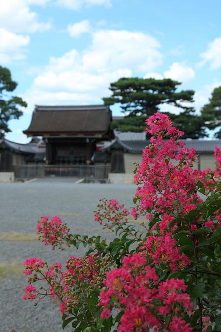 Kyotogyoen1008316