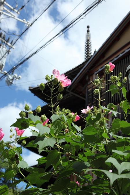 Yasakanotou1010067