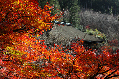 Kiyomizudera1012095