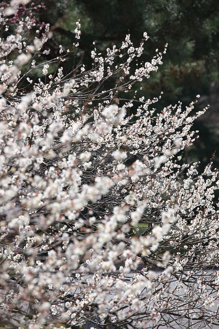 Kyotogyoen1103225