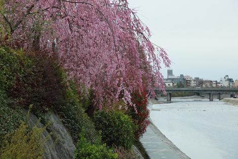 Kamogawa1104083