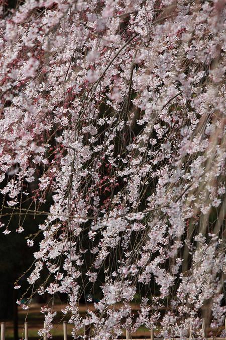 Kyotogyoen1104075