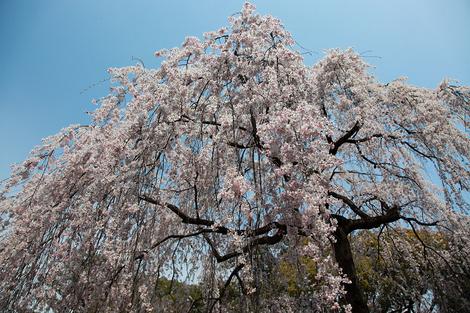 Kyotogyoen1104076