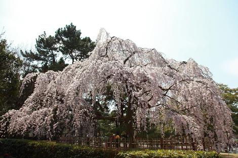 Kyotogyoen1104077