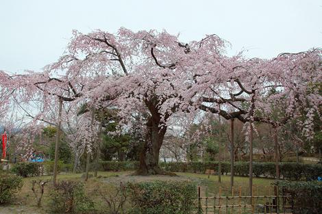 Maruyamakouen1104083