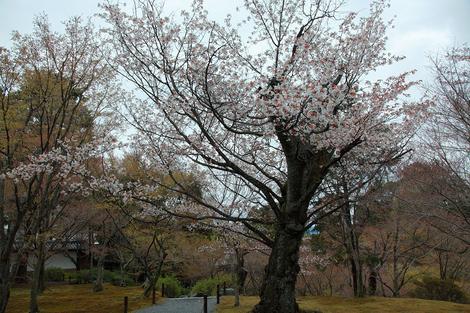 Toufukuji1104152