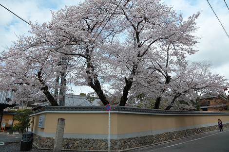 Toufukuji1104156