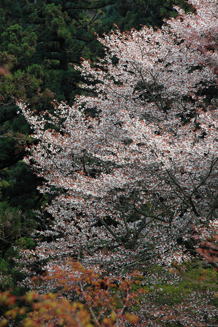 Enryakuji1104303_2
