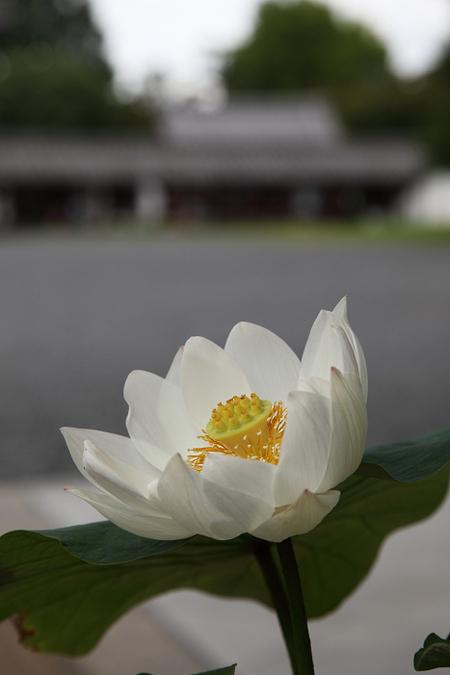 Toufukuji1107063