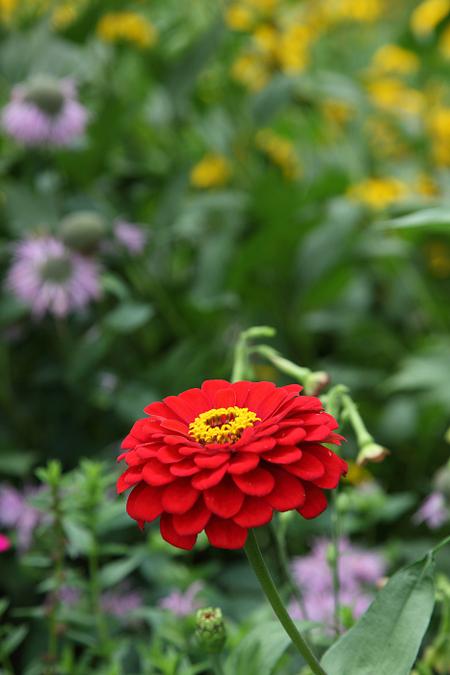 Garden1107303
