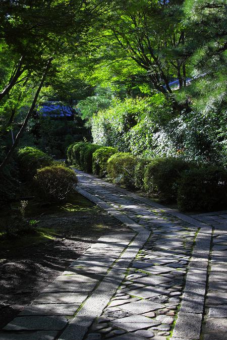 Daitokuji1110072