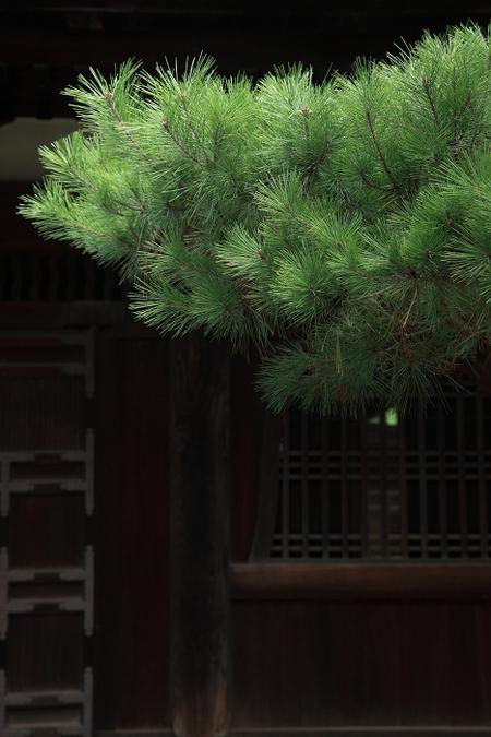 Daitokuji1110073