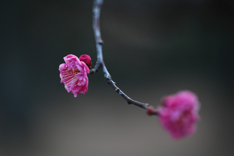 Kyotogyoen1202071