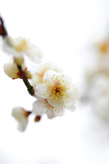 Kyotogyoen1202285