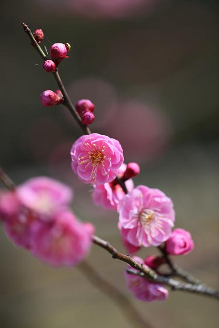 Kyotogyoen1203061