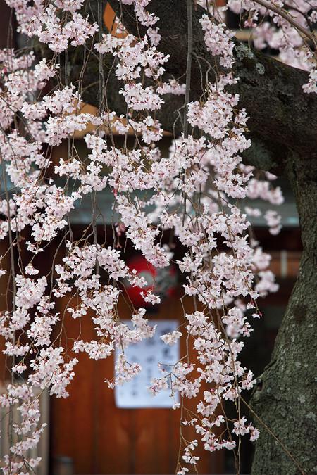 Gionsirakawa1204103