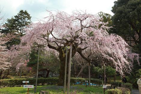 Maruyama1204083