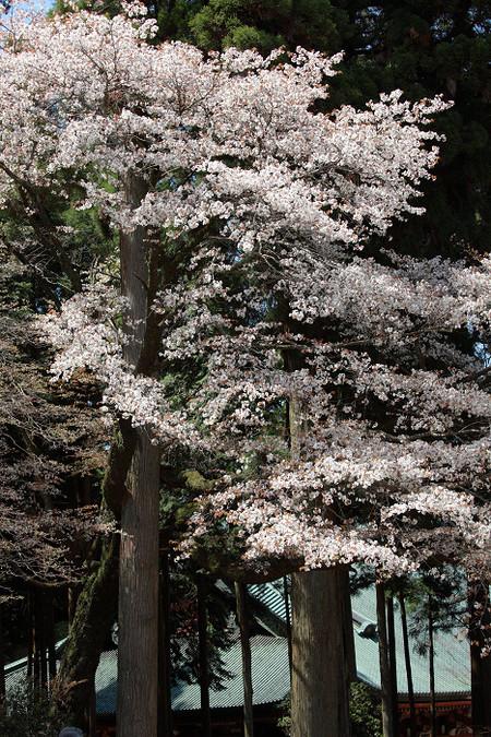 Enryakuji1204281