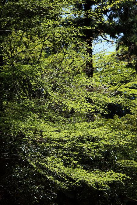 Enryakuji1204307