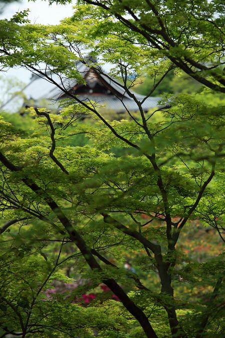 Maruyamakouen1205116