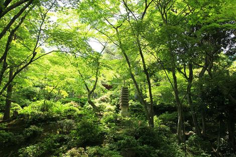 Jyoujyakkouji1205225