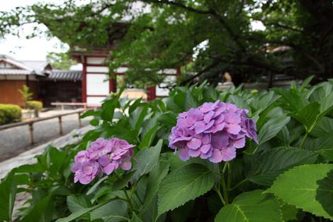 Honpouji1206272