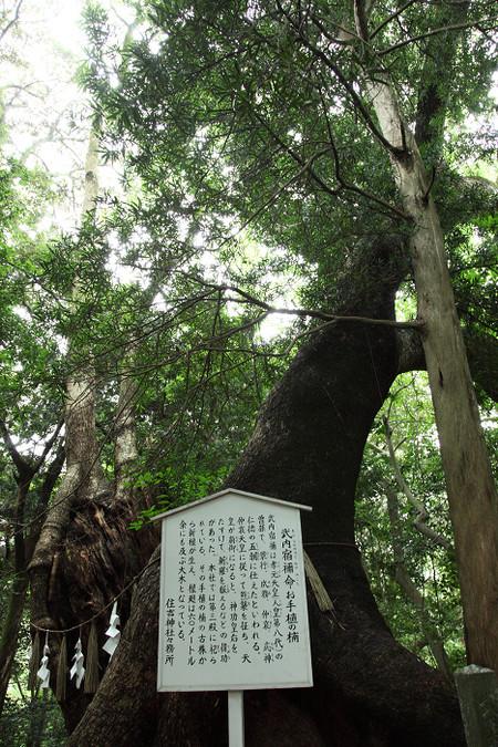 Sumiyosijinjya1208313