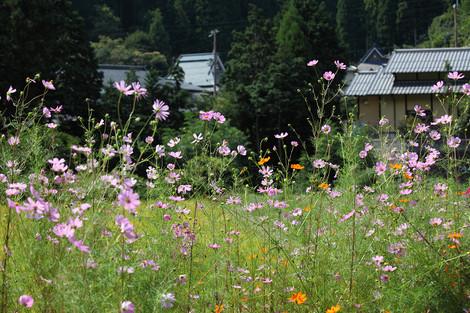 Kosumosu1209262