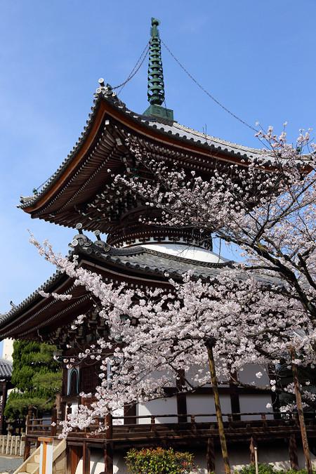 Honpouji3104051