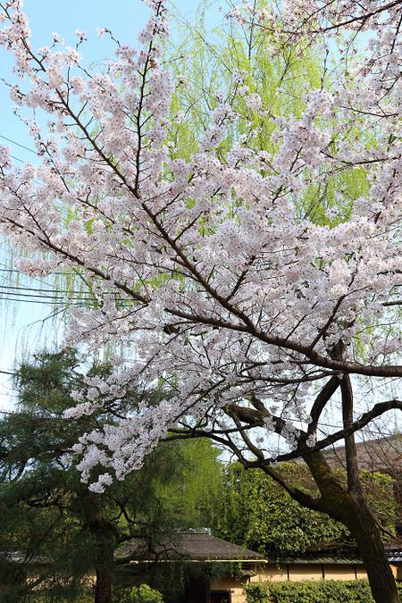 Honpouji3104057