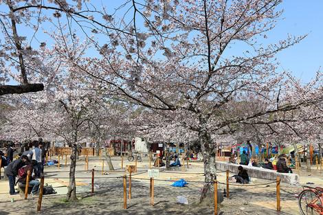 Maruyamakouen130406