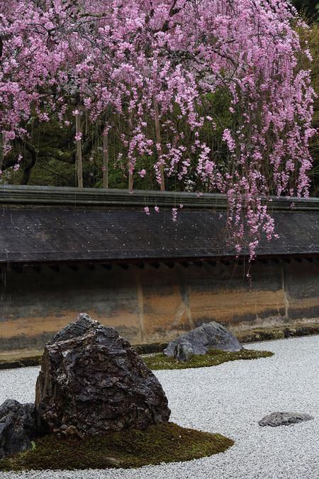 Ryoanji1304121