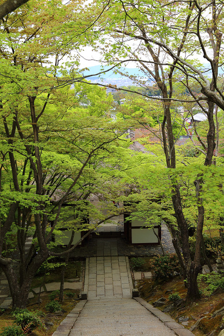 Jyoujakkouji1304251