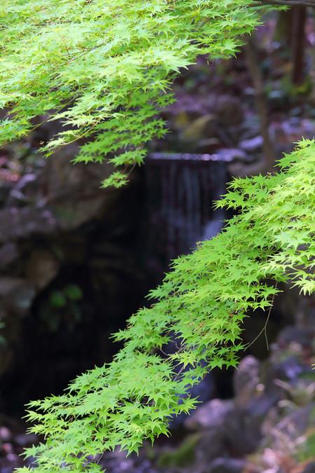 Maruyamakouen1304283