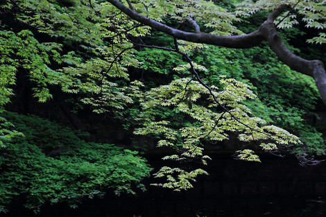 Kiyomizudera1305035