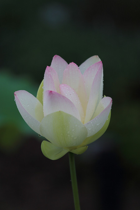 Syokubutuen1306181