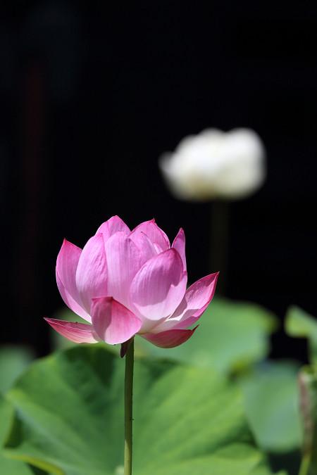 Ryuhonji1307065