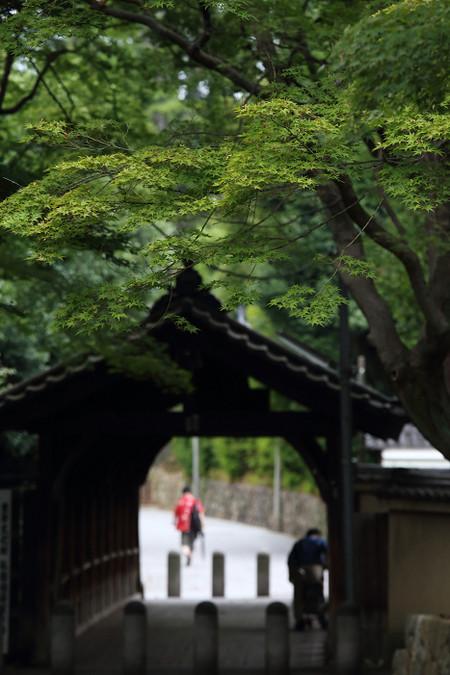 Toufukuji1307081