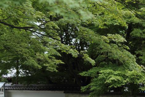 Toufukuji1307087