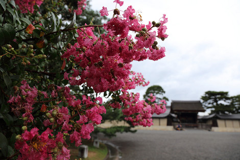 Kyotogyoen1308275
