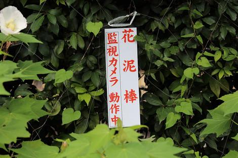 Sinyodou1309027