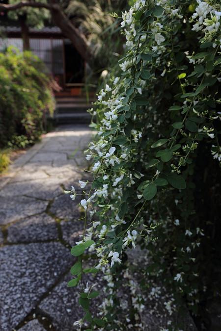 Jyourinji1309262