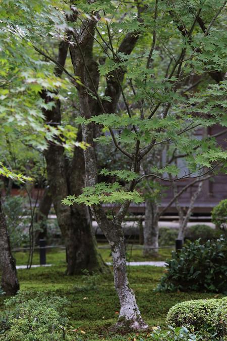 Enkouji1311026