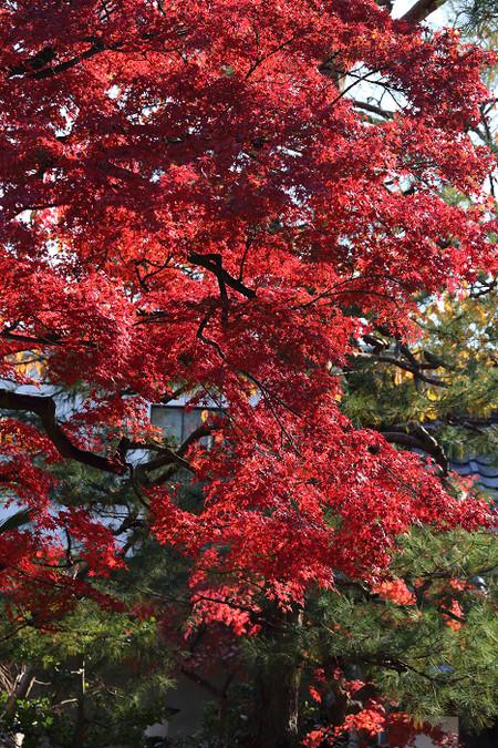 Jifukuji1312051