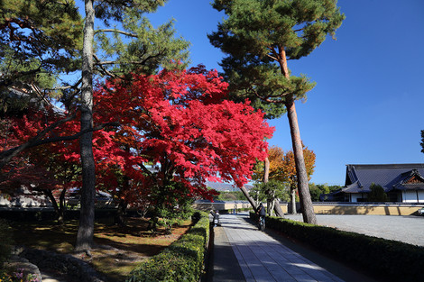 Syoukokuji1312062